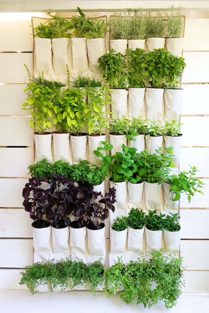 shoeOrganizer_Plants.jpg
