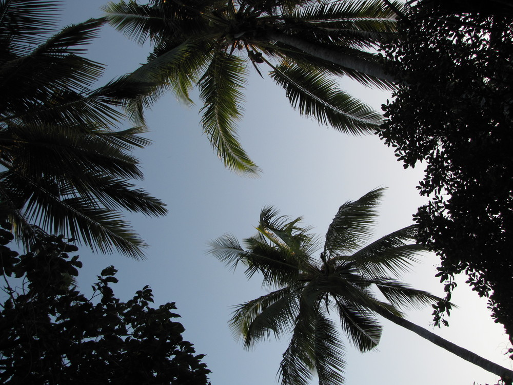 The breeze at dawn, the sound of the sea and swaying coconut trees have secrets to tell us…Breath slows down to the rhythm of nature.