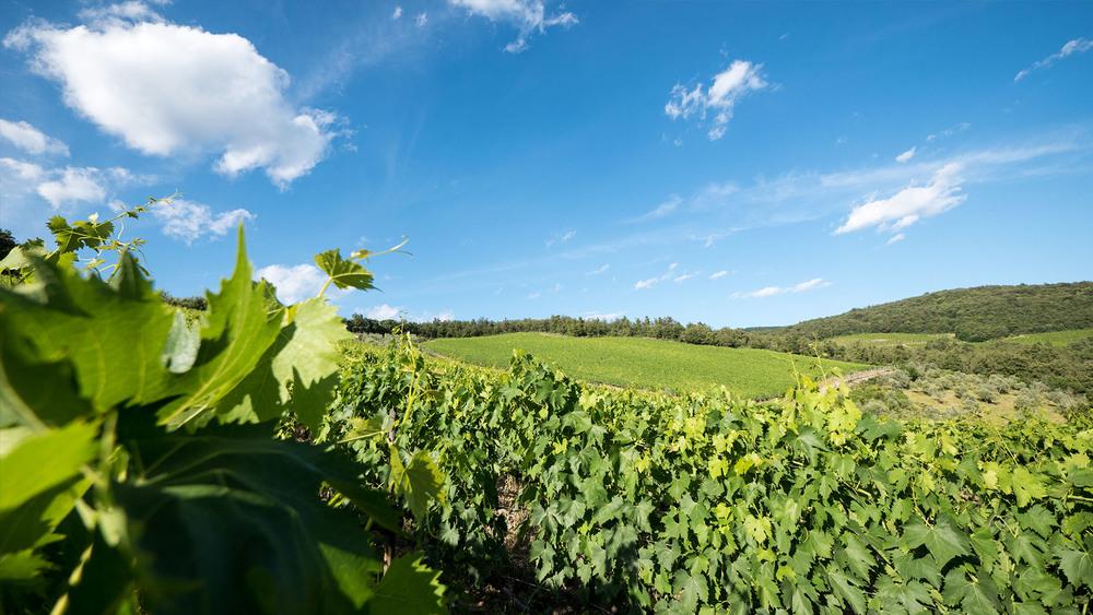 Poggerino-Winery-04.jpg