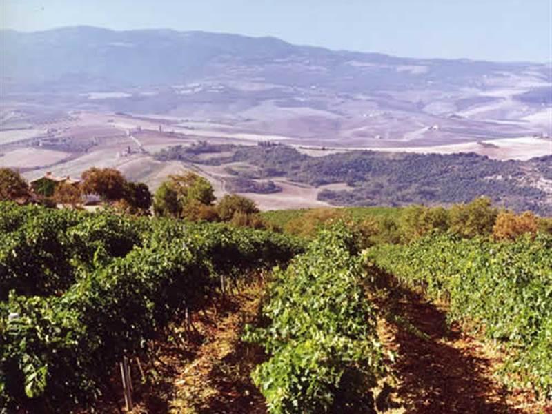 fattoria-poggio-di-sotto-vini-toscani-34725.jpg