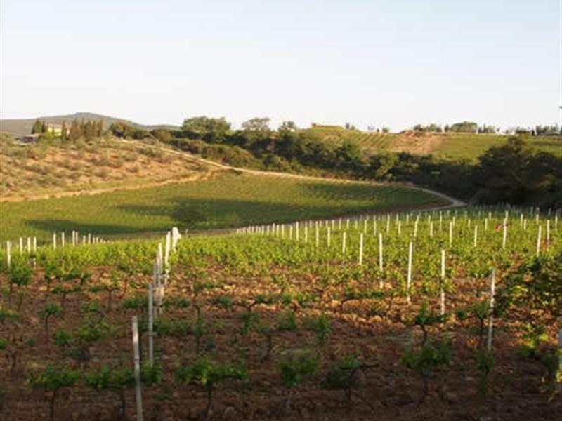 fattoria-poggio-di-sotto-vini-toscani-34724.jpg