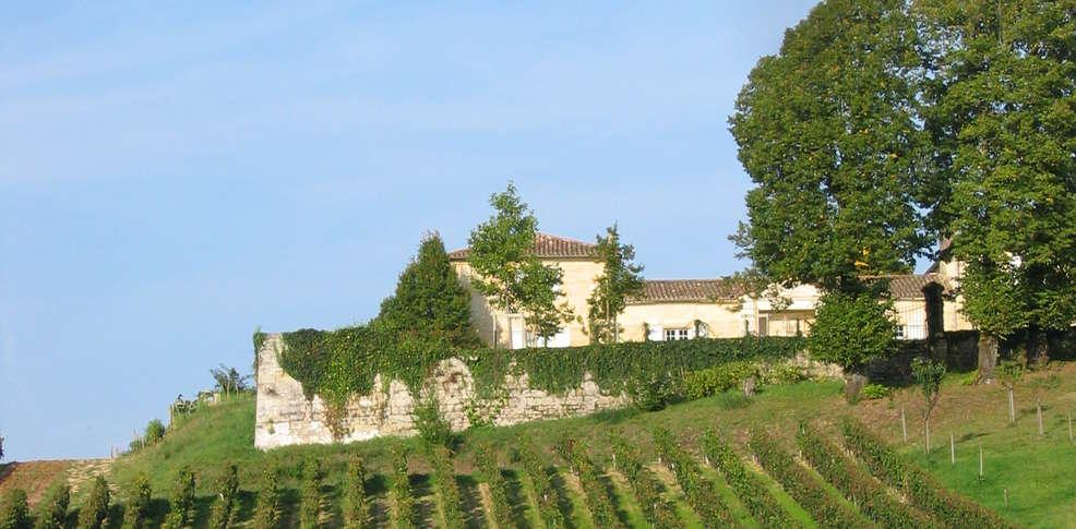 422229_986_485_FSImage_1_Chateau_Belles-Graves_vignes.jpg