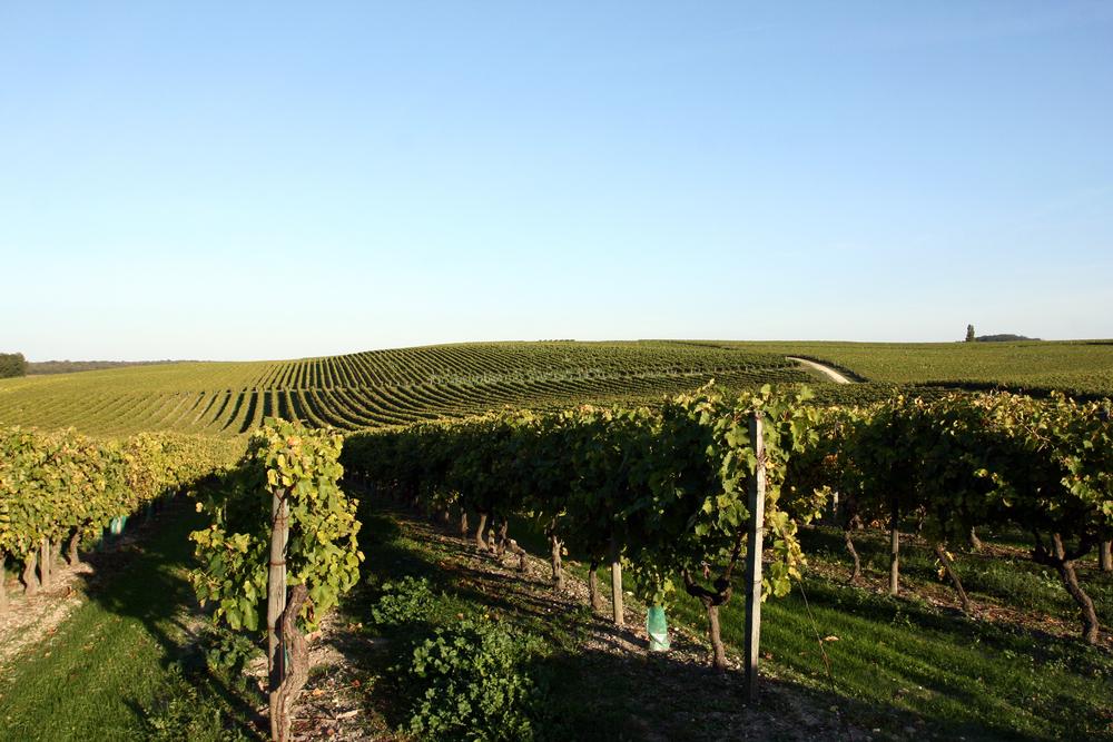 vignobles-septembre-2.jpg