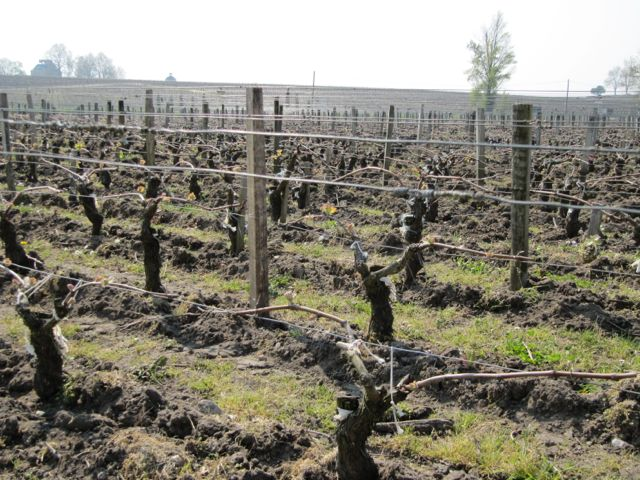 hbl-vines-to-latour.jpg