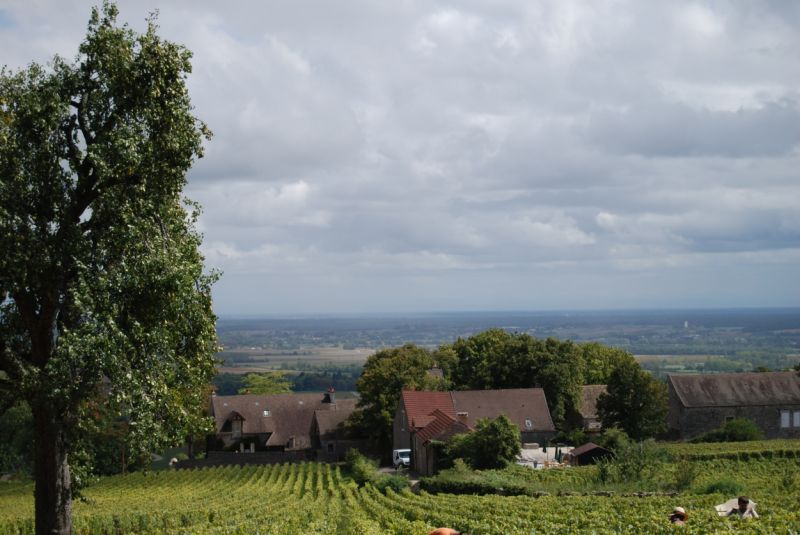 Domaine-Martelet-Cherisey.jpg