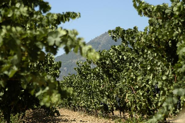 Anecoop-vineyards-VINA_30.jpg