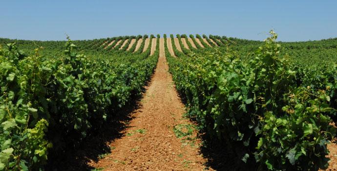 vineyard-spain.jpg