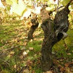 Domaine-vineyards-235x235.jpg