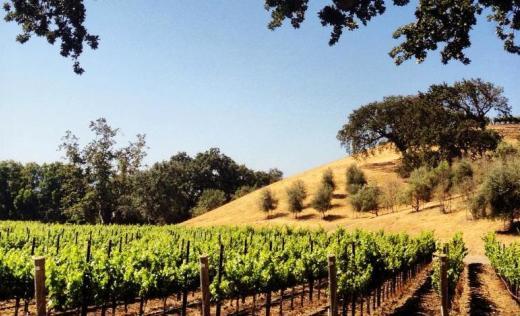 palmina-wines-82083.jpg