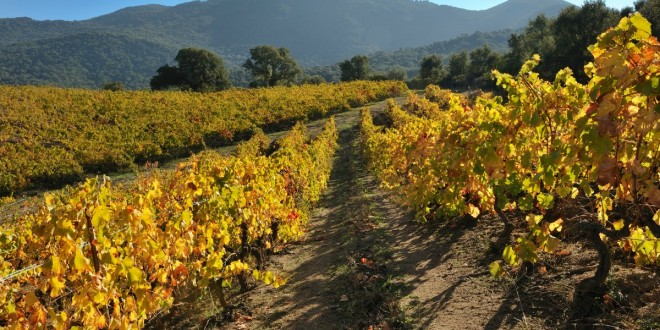 Vineyards-in-the-Fall--660x330.jpg