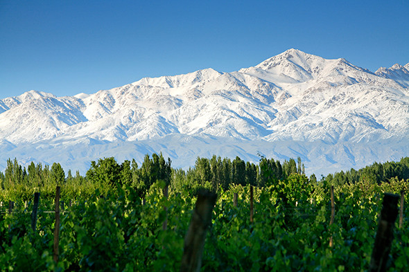 mendoza-andes-argentina-vineyards-snow-590-590x393.jpg
