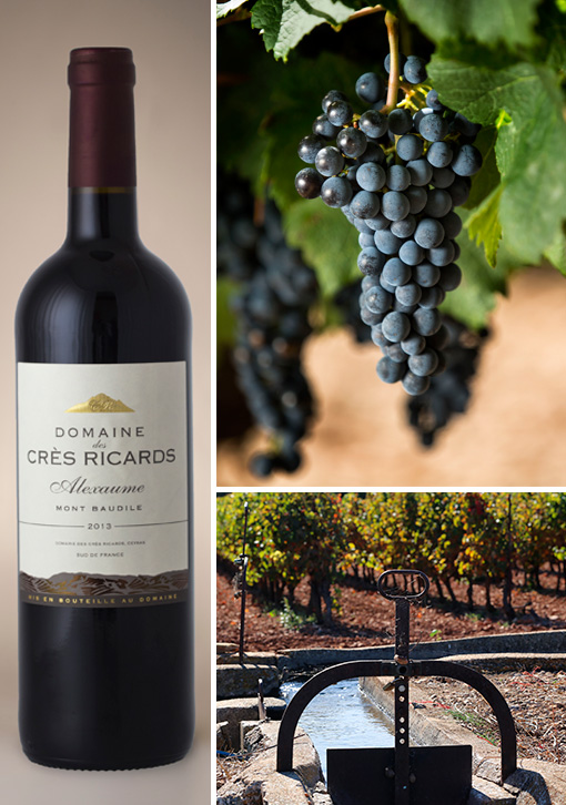 cres-ricard-alexaume-grappe (1).jpg