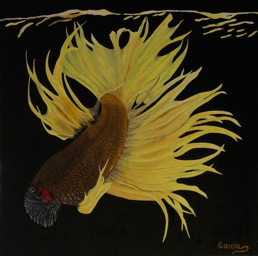 "Betta Crowntail 20"" x 20"""