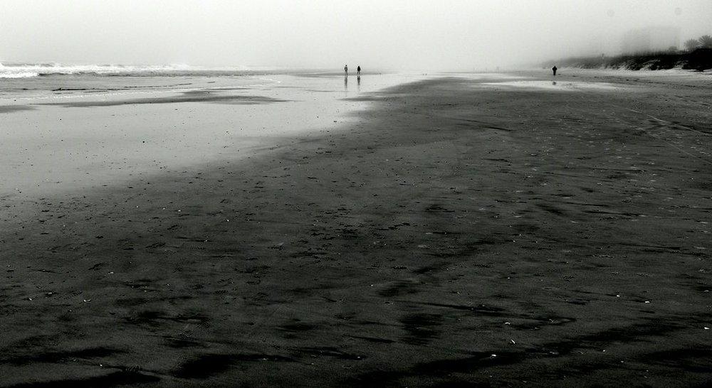 Shells Ashore