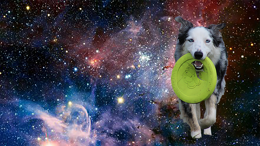 doginspace.jpg