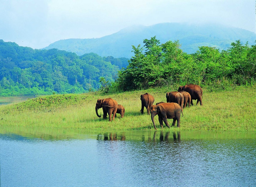 Nandini Wild Life Sanctuary