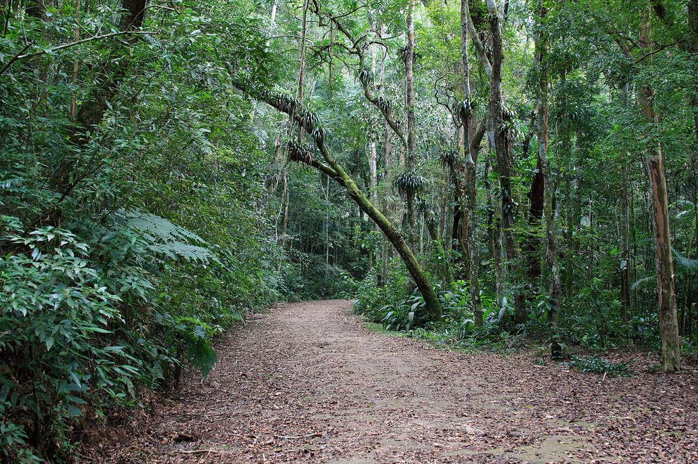 Tijuka Forest