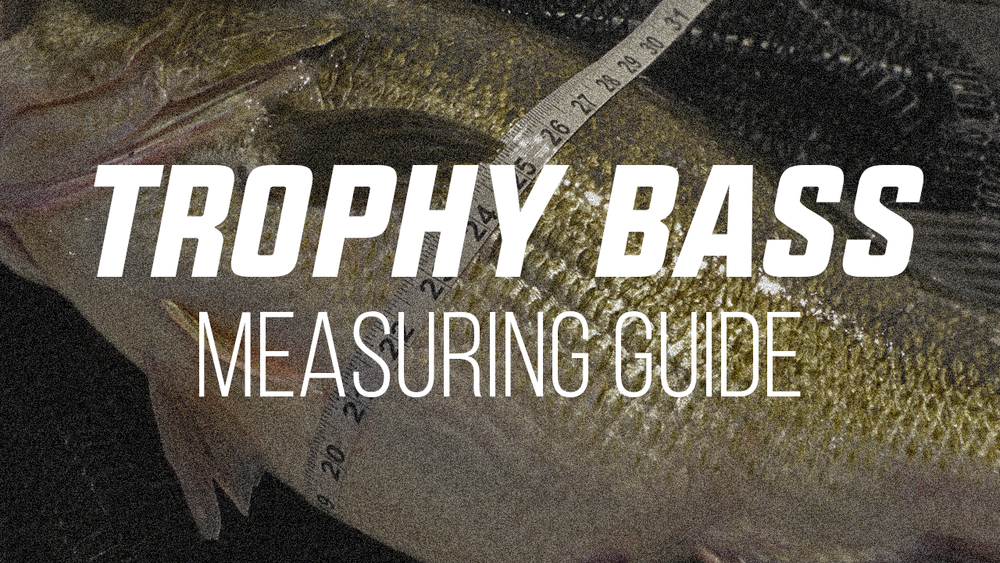 Trophy Bass MEasuring Guide.png