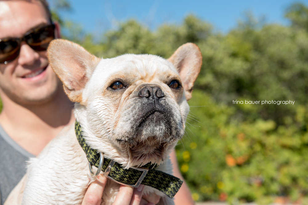 trina.bauer.photography.frenchie.bonita.springs.florida.jpg