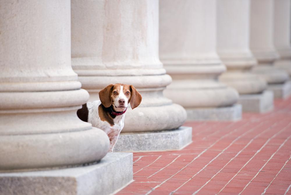 trina-bauer-photography-beagle-penn-state.jpg