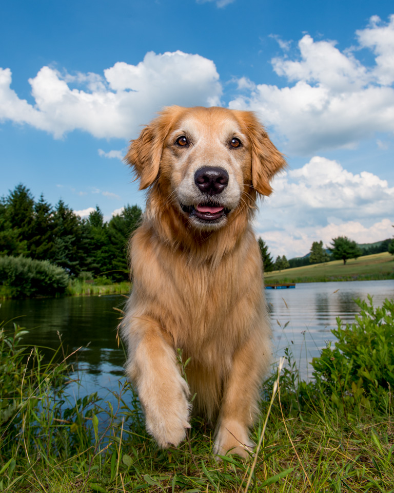 trina-bauer-photography-golden-retriever-vibrant-sky