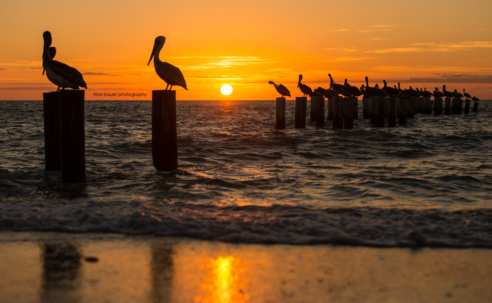 pelicans-pylon-silhouette-sunset-naples-floridafb.jpg