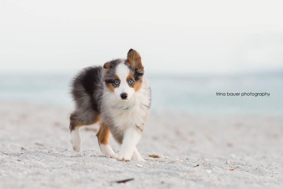 Wilson.puppy.strut