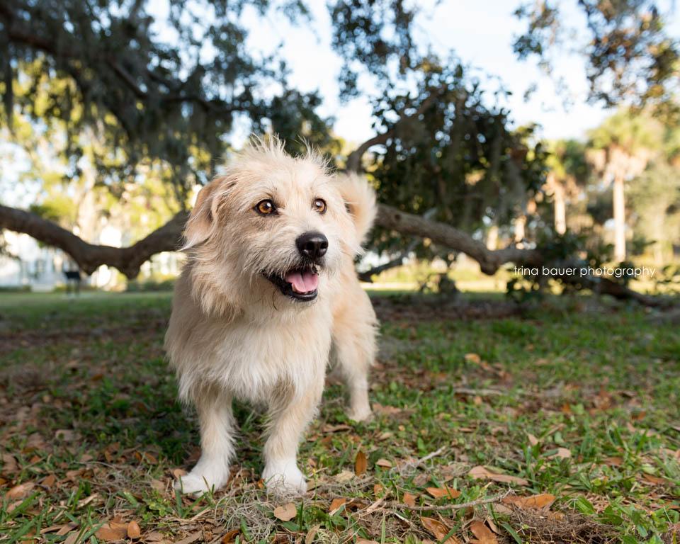 Izzy.tree.shade.Sarasota.Florida
