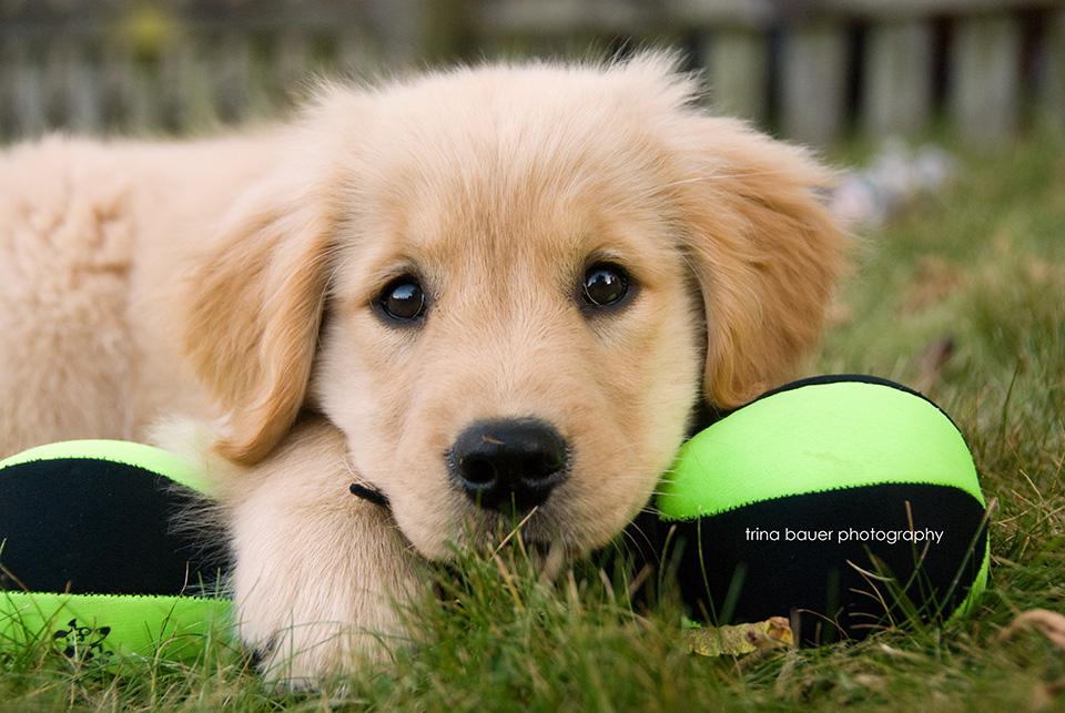 Izzy.puppy.jpg