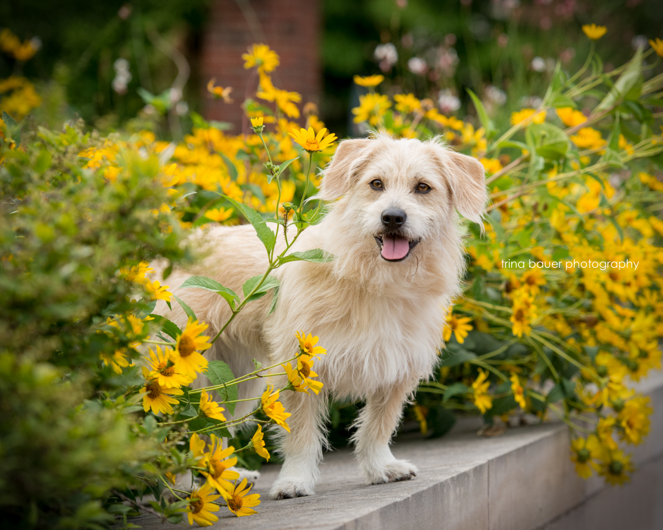 Kita.yellow.flowers.Penn.State.jpg