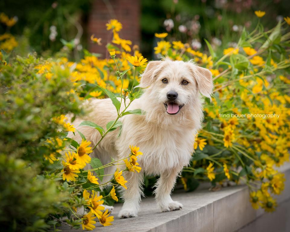 Kita.yellow.flowers.Penn.State.jpg