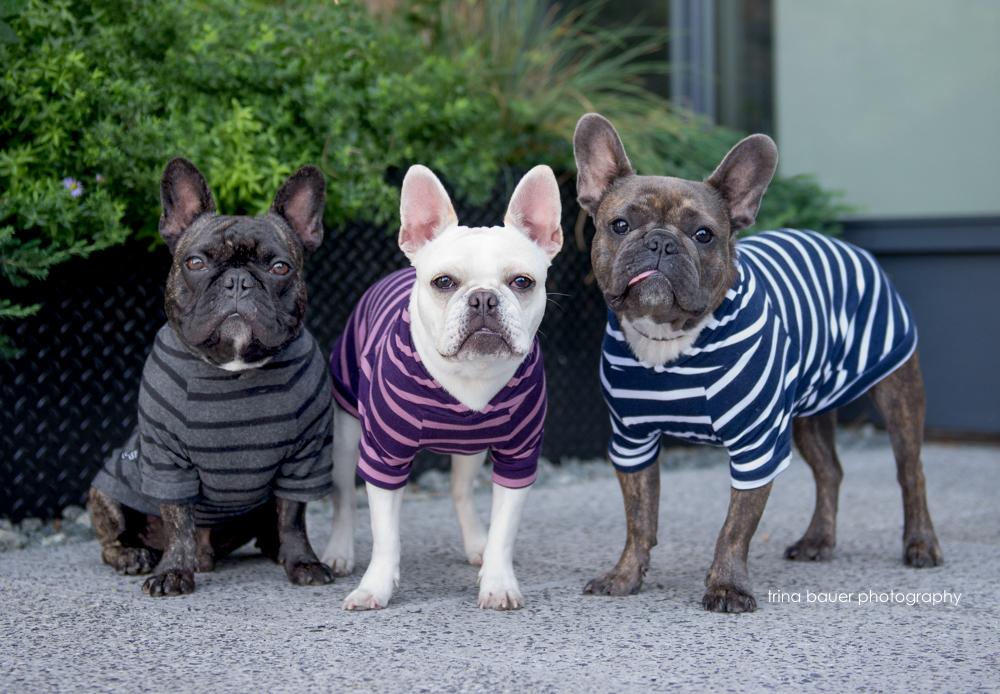 Frenchies.hoodies.NYC