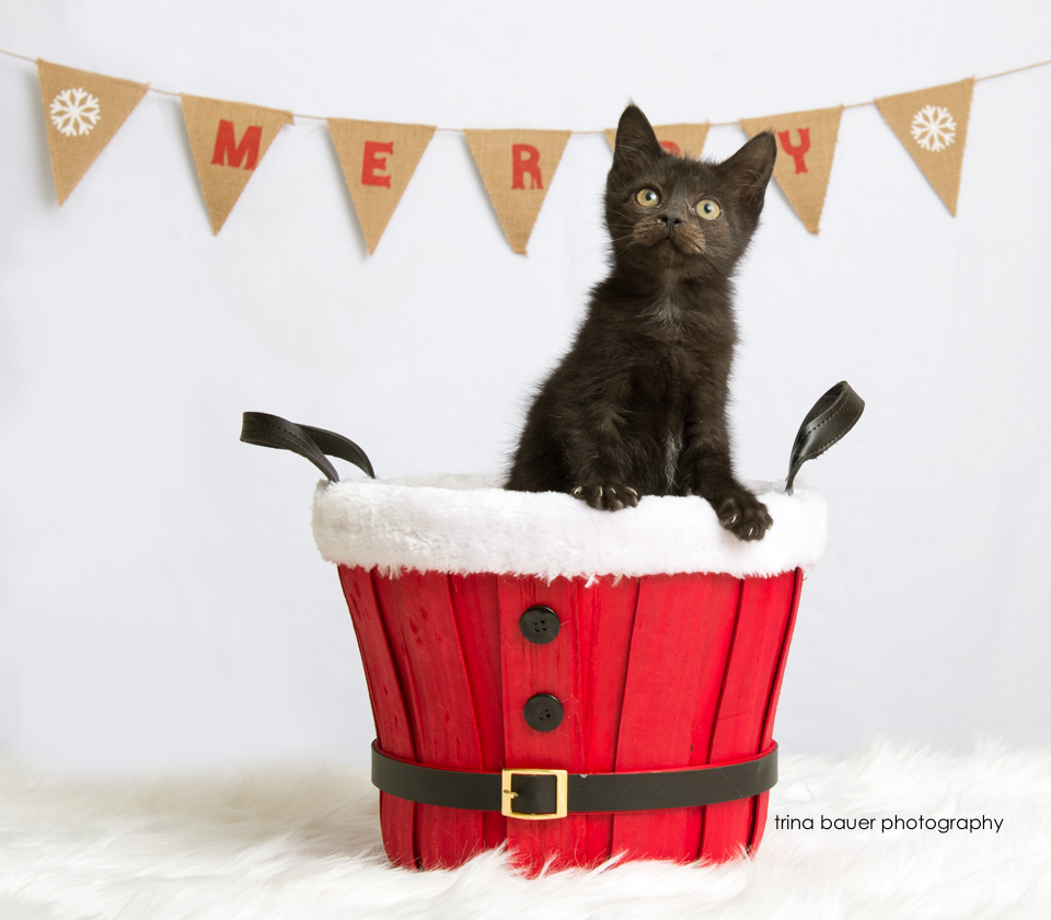 E kitten I.jpg