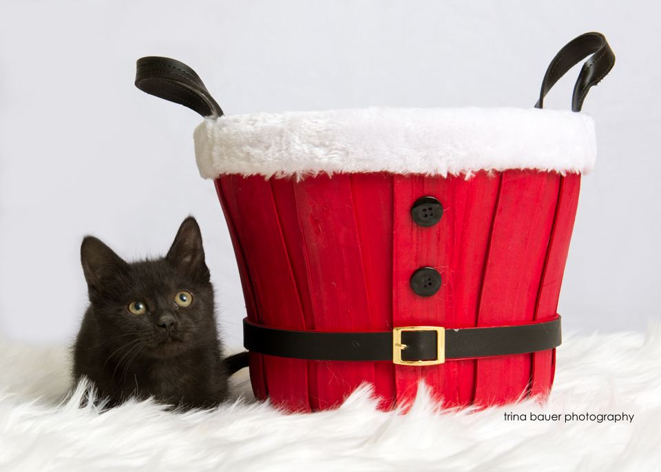 E kitten II.jpg