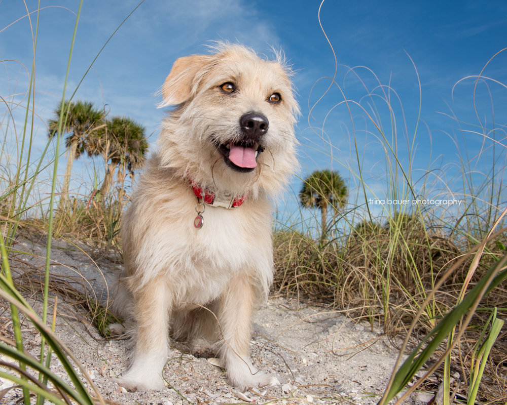 Southwest.Florida.dog.beach.blue.sky