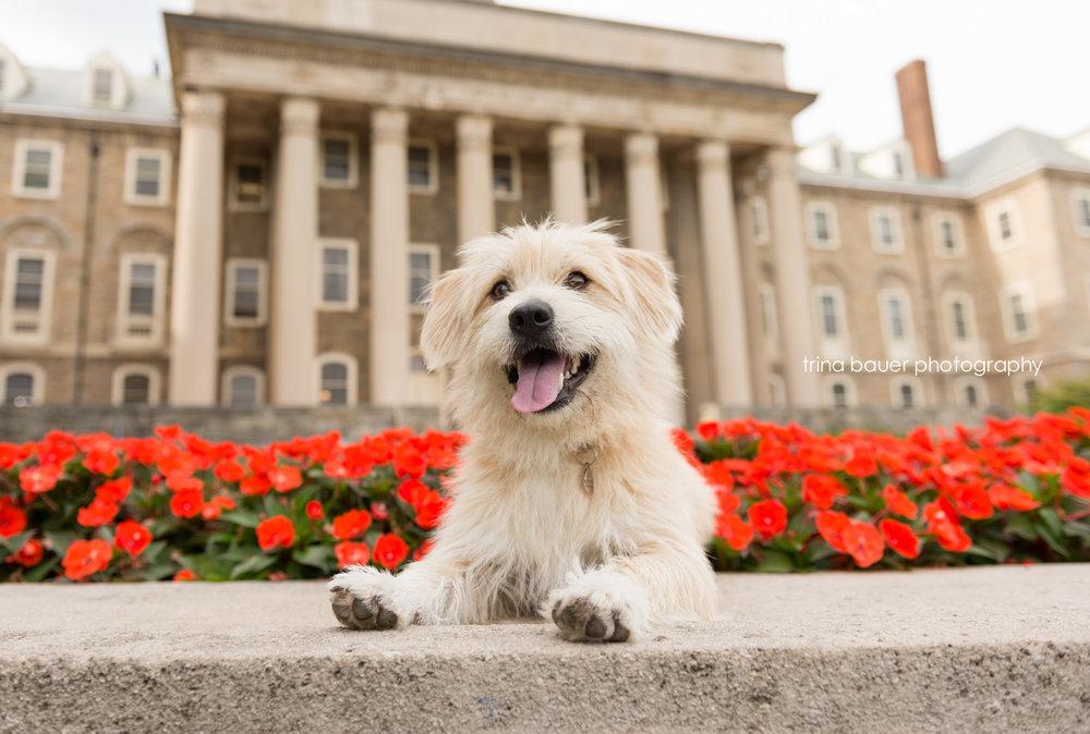 trina.bauer.photography.dog.Penn.State.Old.Main.jpg