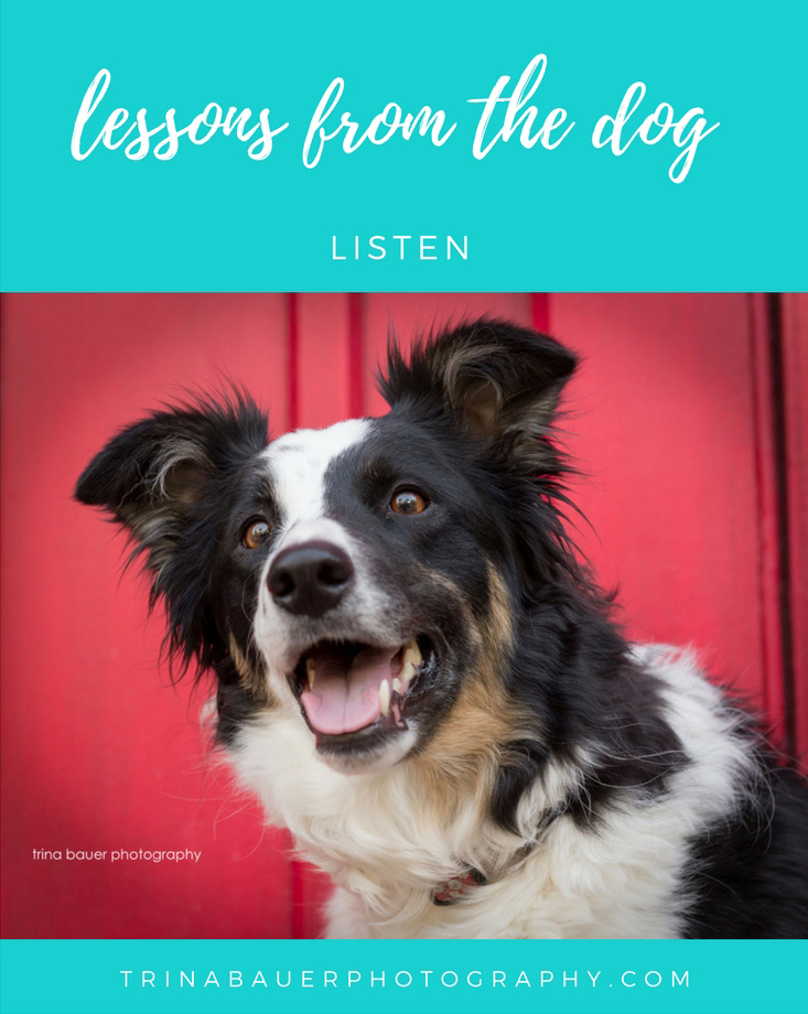 lessons from the dog - listen