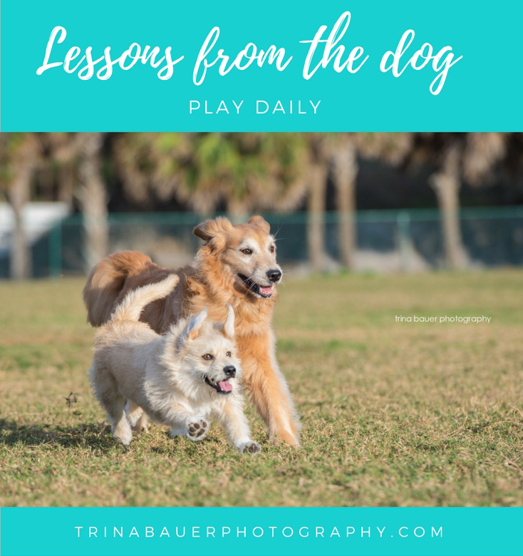 Lessons from the dog - play daily