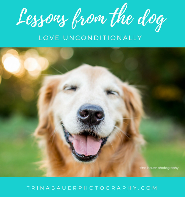 Lessons from the dog - love unconditionally