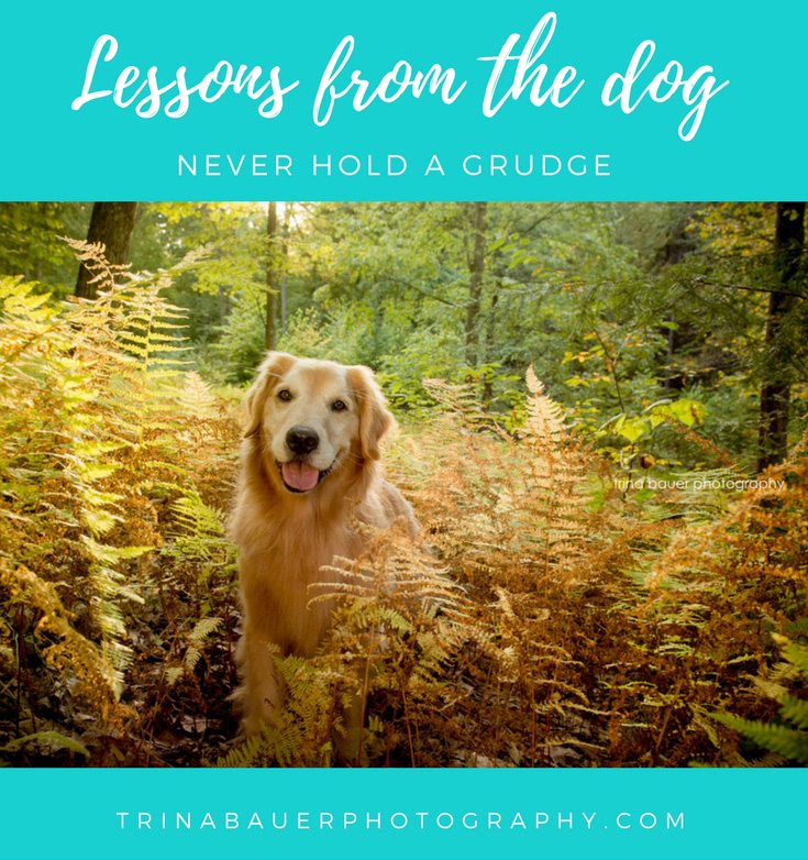 Lessons from the dog - never hold a grudge
