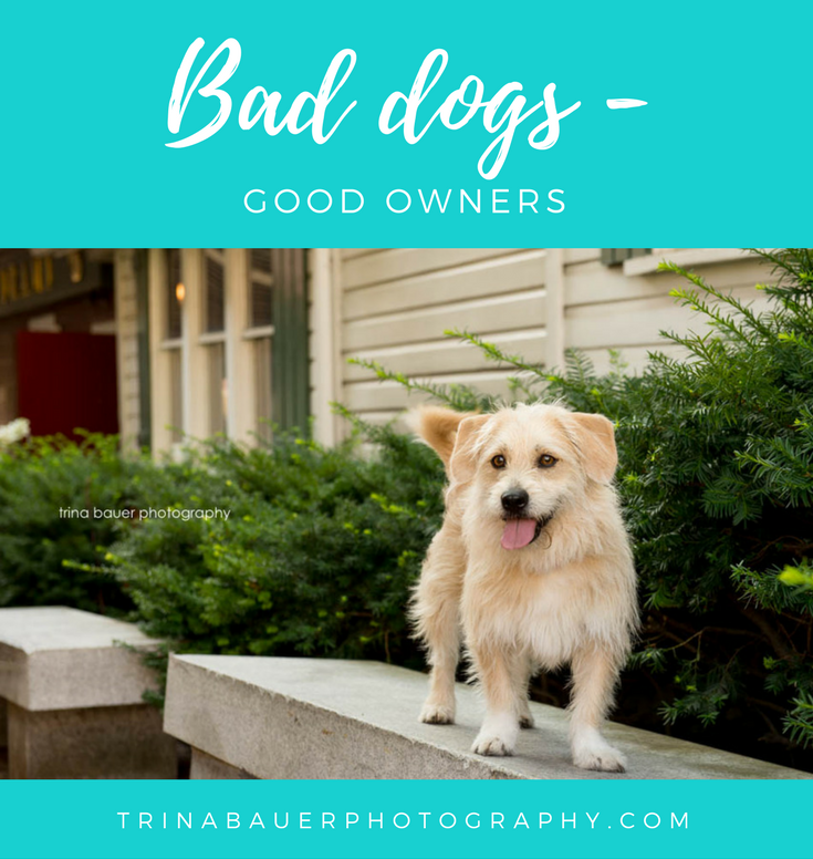 Bad dogs, good owners