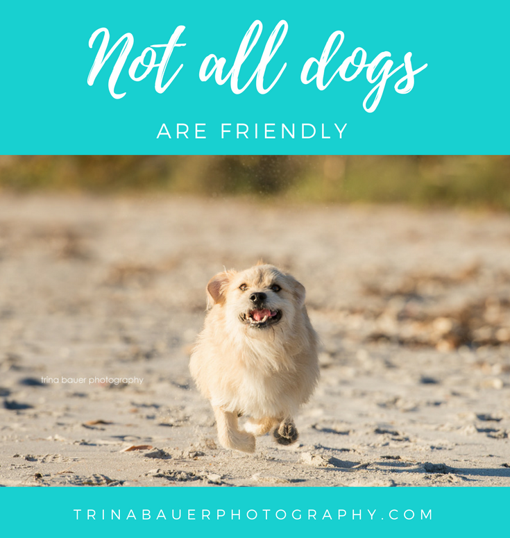 Not all dogs are friendly
