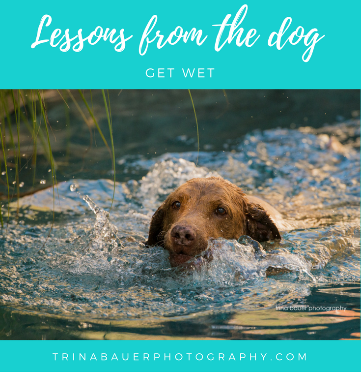 Lessons from the dog - Get Wet