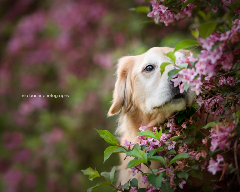 Izzy smelling flowers-2.jpg
