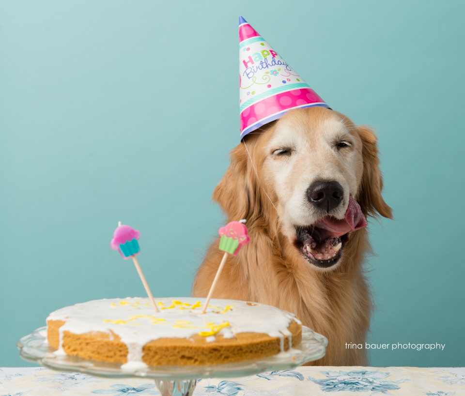 golden retriever birthday cake smash - 2