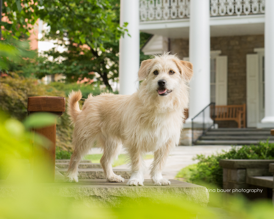 terrier mix Penn State University