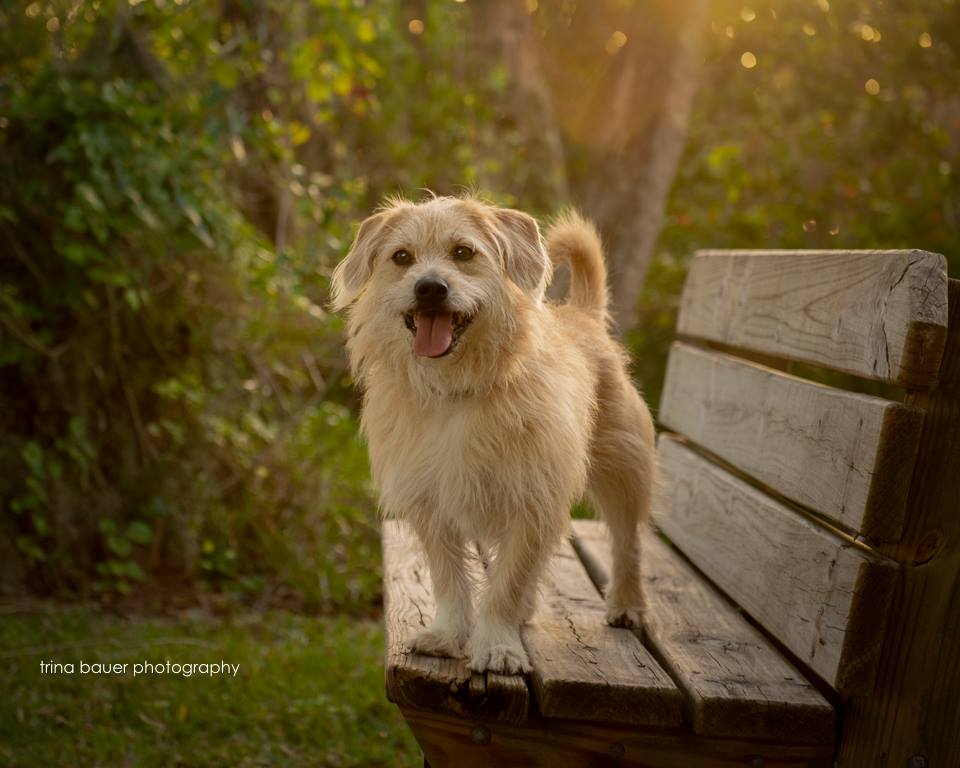 terrier mix southwest florida park