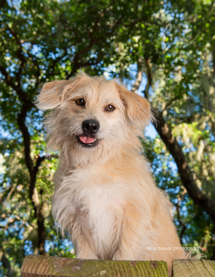 terrier mix in Florida