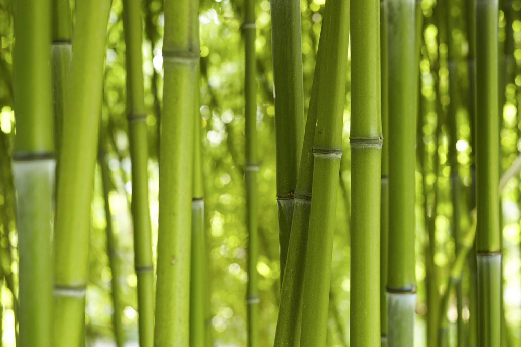 bambus catlitterplus. Black Bedroom Furniture Sets. Home Design Ideas