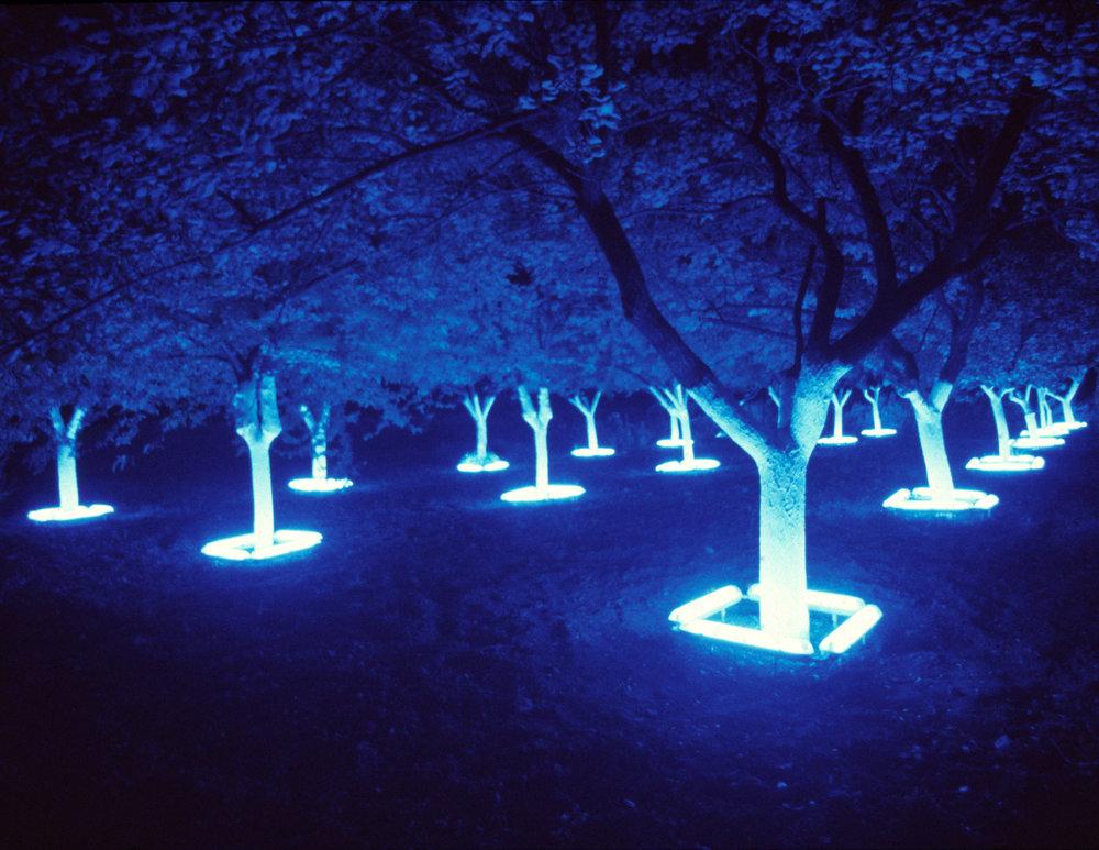 lightgarden front 1500px.jpg